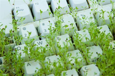 imagenes de tecnologias verdes how to grow green grass on your computer keyboard