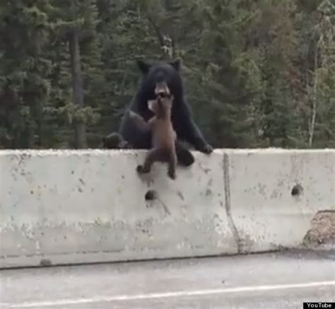 Look Who Is Coming To Brits Rescue by Rescues Cub From Park Highway In