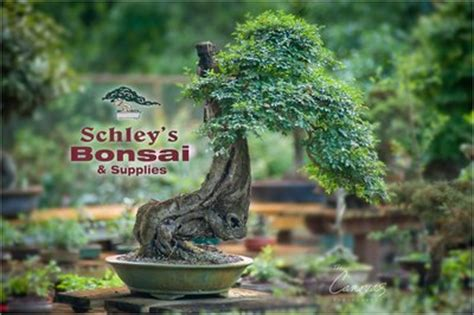 bon voyage meaning in telugu where to buy bonsai trees schley s bonsai supplies