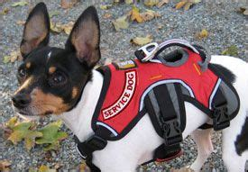 how to register your as a therapy 17 best images about esa on therapy dogs service dogs and