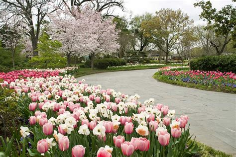 Dallas Botanic Garden Dallas Arboretum Ranked Second Best Garden In The World Fort Worth News Newslocker