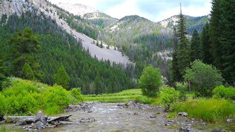 Wyoming Maxy flat creek ranch jackson wyoming