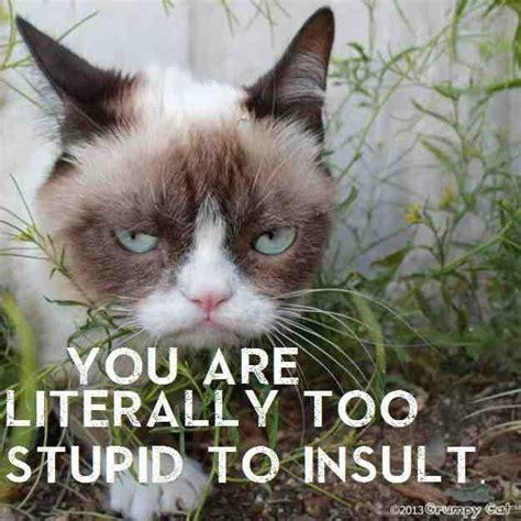 Sarcastic Cat Meme - obama grumpy cat quotes quotesgram