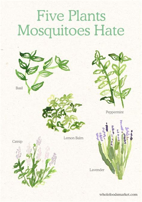 scents to keep mosquitoes away best 20 keep mosquitoes away ideas on mosquito spray for yard diy mosquito