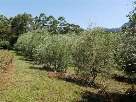 when do live trees go on sale can biochar make olives fruit more biochar project will