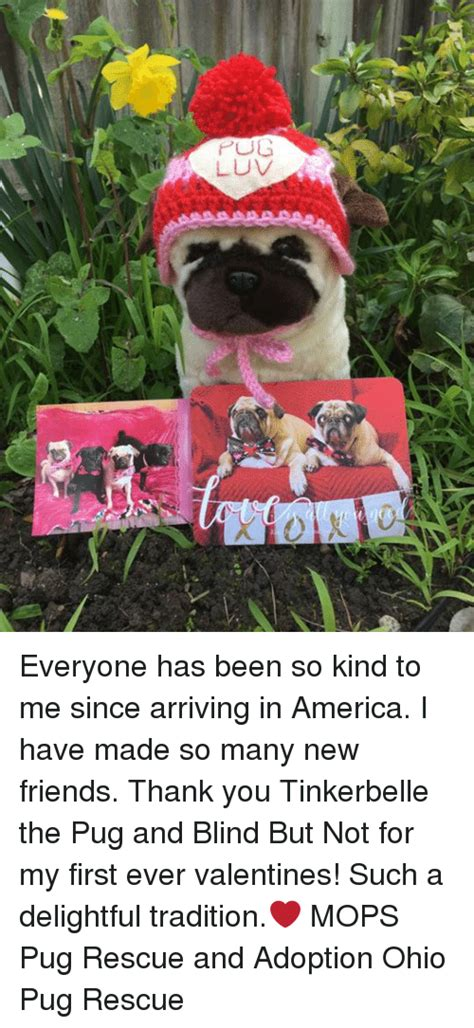 mops pug rescue adoption pug everyone has been so to me since arriving in america i made so many