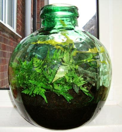 create  grow  terrarium bottle garden