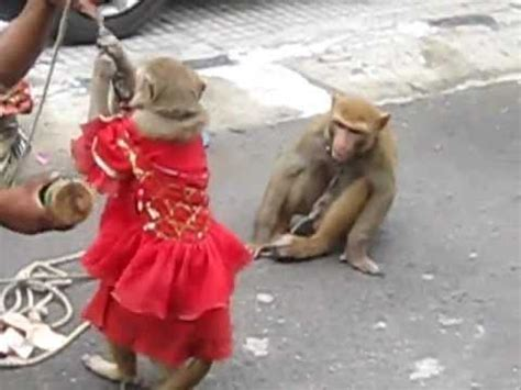 monkey dance india youtube