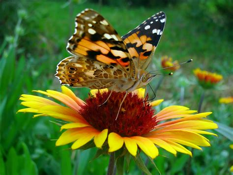 Flower Garden With Butterflies Commonboundaries Design A Flower Bed Or Garden With Butterflies In Mind