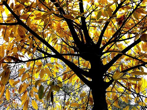 Trees That Shed Leaves by