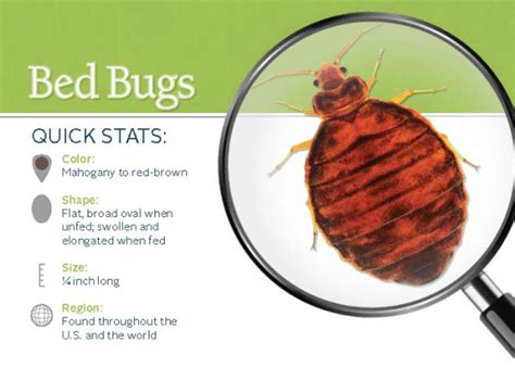 do i have bed bugs do i have bed bugs faq signs of bed bugs