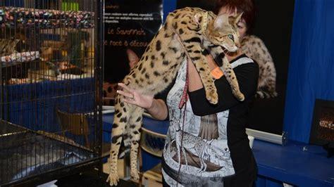 8e salon des animaux de compagnie de l abitibi