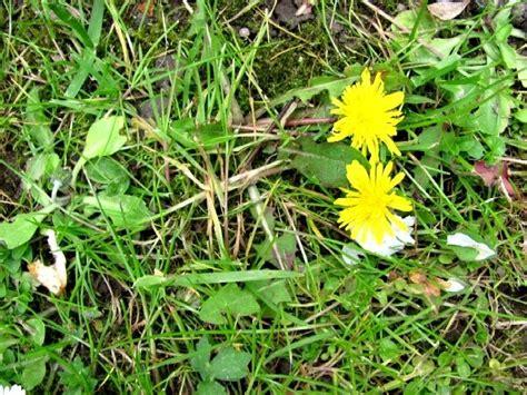 Gelbe Pilze Im Garten by Garten Anders L 246 Wenzahn Mein Kf Gegen Dieses