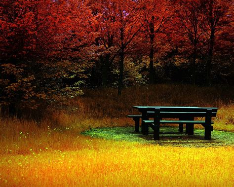 fall bench autumn bench chair falling forest leaves season nature