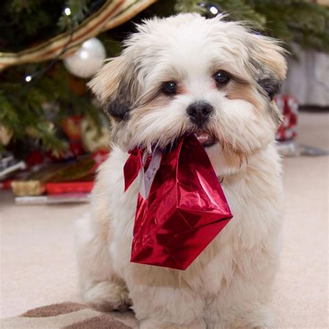 christmas wallpaper with dogs ipad wallpapers free download christmas pets ipad