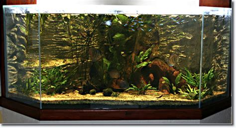 Lu Aquarium aquarium d interieur design aquarium design ideas