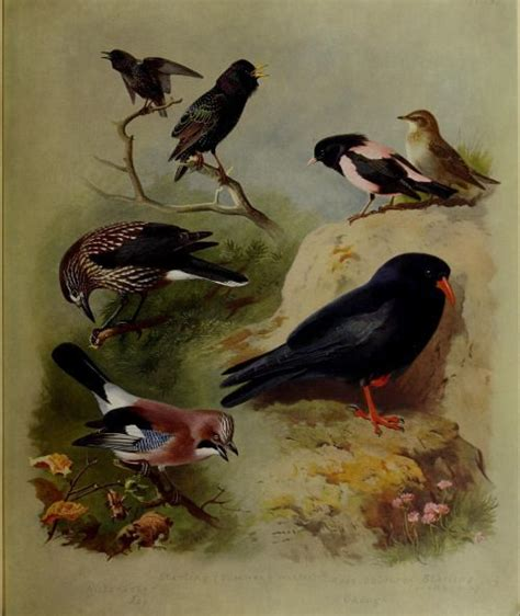 british wildlife marvelous menageries 1784935514 825 best images about vintage bird nest egg illustrations on wild birds john