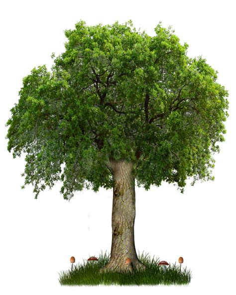 trees images png tree 8 by moonglowlilly on deviantart