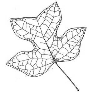 tulip leaf coloring page tulip tree leaf coloring page free printable coloring pages