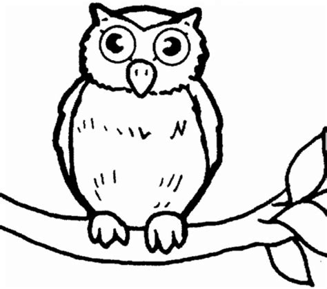 Pictures Of Owls To Color picture of owls to color printable owl coloring pages