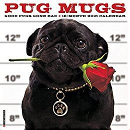 pug mugs book pug mugs calendar co uk willow creek press 9781623437756 books