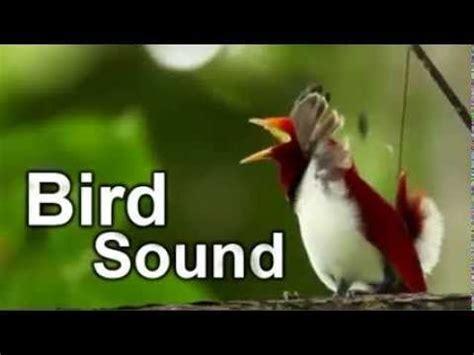 bird sound 2 hours youtube musica pinterest