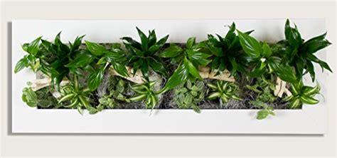 pflanzen an der wand flowerwall echtes lebendes pflanzenbild 187 moosbild