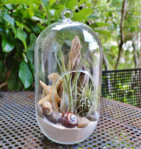 summer vibe  beach terrariums adorable home