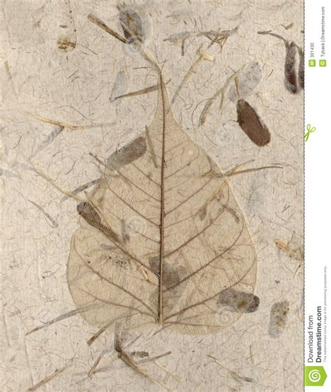 Handmade Leaf Paper - handmade skeleton leaf stock photo image 301430