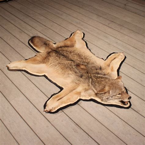 coyote rug mount coyote rug mount 11059 the taxidermy store
