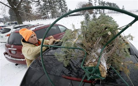 growers grateful for higher christmas tree prices the blade