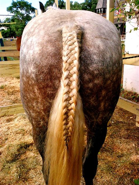 hairstyles for with horseu hair lines best 20 horse hair styles ideas on pinterest horse hair