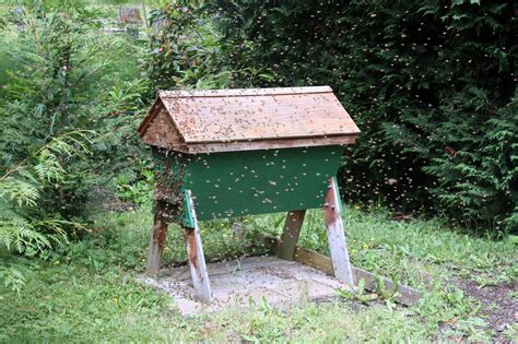 top bar hives for sale top bar hives for sale 28 images faq bunch bees top