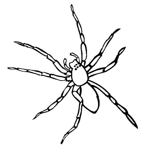 free spider colour coloring pages jumping spider coloring page animals town free jumping