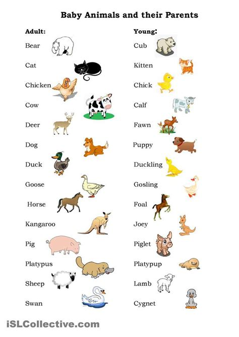 facts the pet parent s a to z home care encyclopedia books 1000 ideas about names of baby animals on