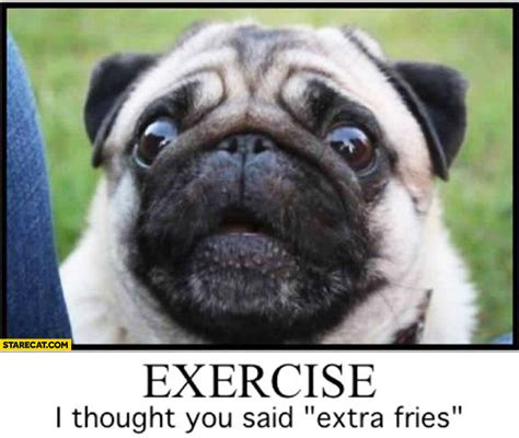 pug i you exercise i thought you said fries pug starecat