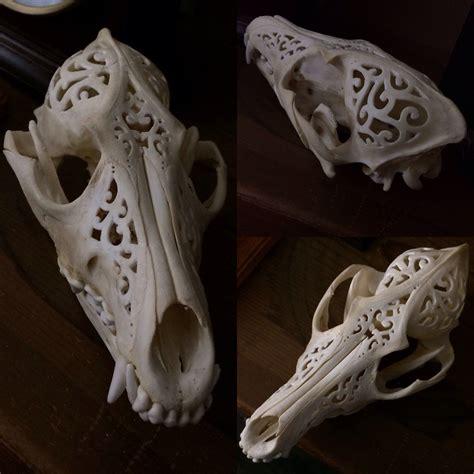 Baby coyote skull