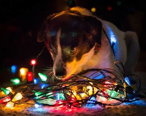 christmas light photography tips picturecorrect photography tips taable note