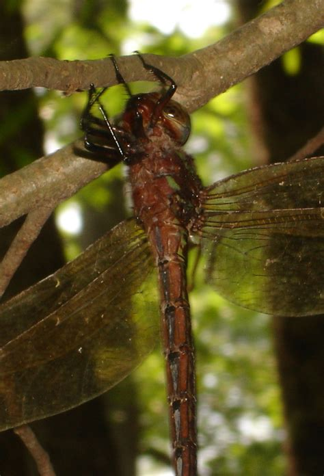 oxygen the molecule that made the world oxford landmark science ebook really big dragonflies 187 j w teaford s wetland notes