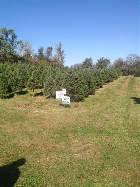 bennington pines christmas tree farm クリスマスツリー nebraska