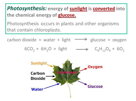 how is light energy converted into chemical energy during photosynthesis light energy photosynthesis glucose oxygen carbon dioxide