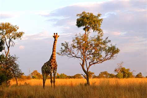 In Africa by In Photos Moments In South Africa The