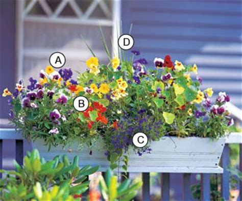Flowers For Planter Boxes In Sun by Best 25 Deck Railing Planters Ideas On
