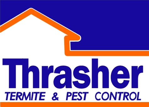 Carpet Beetles on the Climb | Thrasher Termite & Pest Control