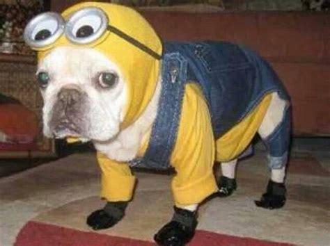 minion puppy minion puppy my style