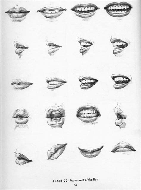 Drawing Mouths by Angles Technical Drawing