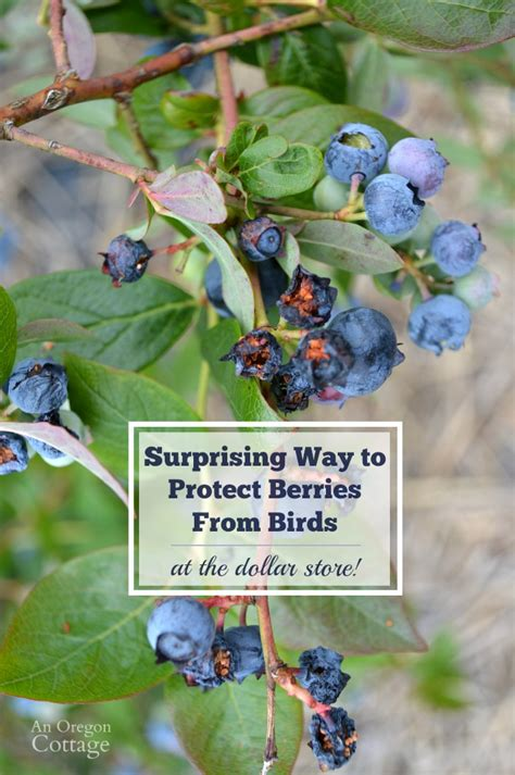 how to scare birds away from patio keep birds away from strawberries images