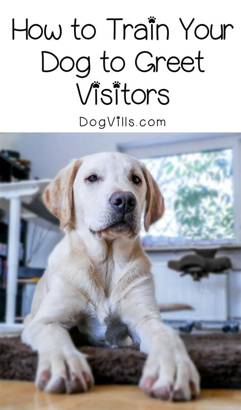 how to your to greet visitors how to your to greet visitors in 5 easy steps dogvills