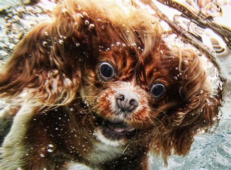 dogs in water underwater dogs in swimming pools slapped ham
