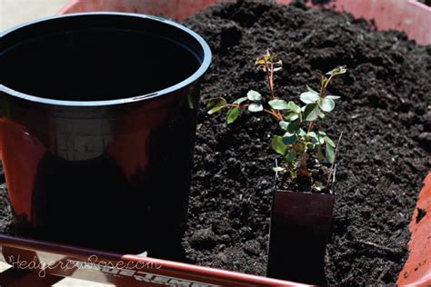 soil mix for container gardening my potting soil recipe for container grown roses